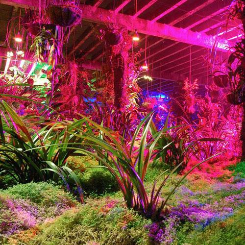 LED Plant Grow Lights
